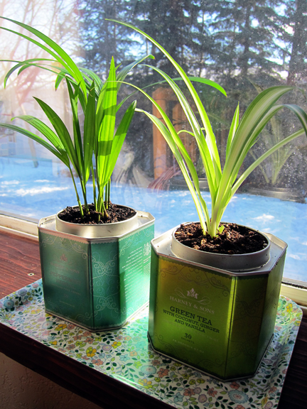 Tea Tin Planters from Alaska Knit Nat