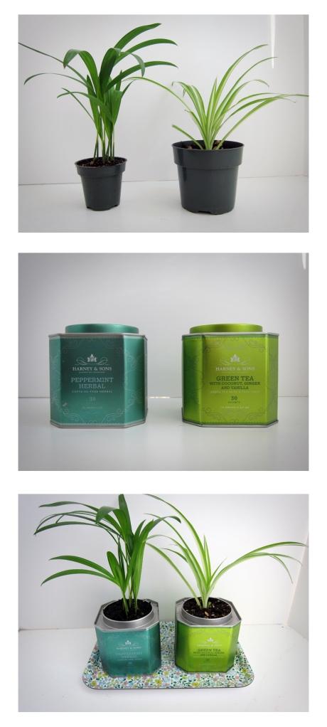Tea Tin Planters from Alaska Knit Nat