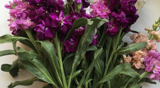 8 Simple Steps to Long-lasting Grocery Store Flowers