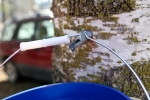 Birch tree tapping | Make your own birch syrup | Alaskaknitnat.com