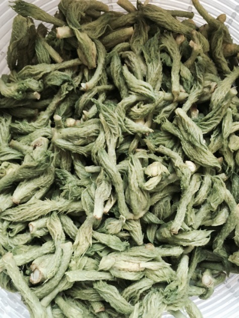 Harvesting Anchorage: Devill's Club Pesto | A free recipe from AlaskaKnitNat.com