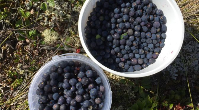 Harvesting Anchorage: Mama's Blueberry Jam