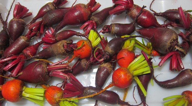 Harvesting Anchorage: Pickling and Canning Beets