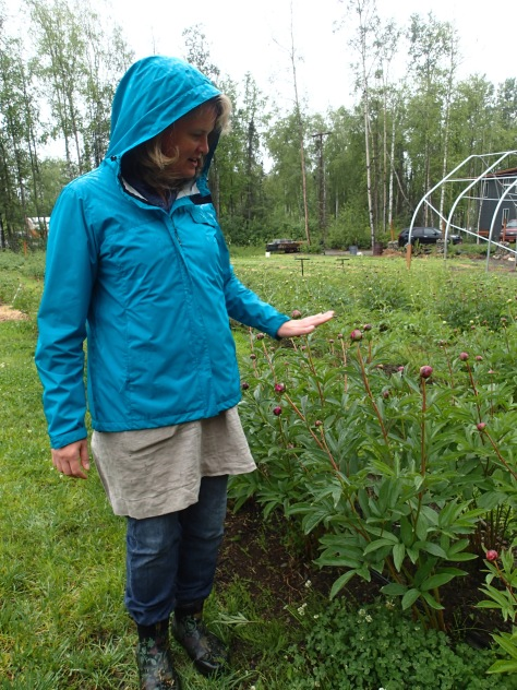 Rachel Christy, owner of Alaska Blooms Peony Farm in Wasilla, gave me a tour of her farm on a rainy Sunday in June. Her farm is in its 6th year and she plans to cut more than 5,000 blooms this year. Story by Natasha Price of alaskaknitnat.com