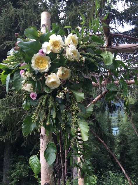 Floral wedding arch arrangements made with garden roses, button mums, hypericum, wax flower, eucalyptus and foraged Alaska greens. |Designed by Natasha Price of Alaskaknitnat.com