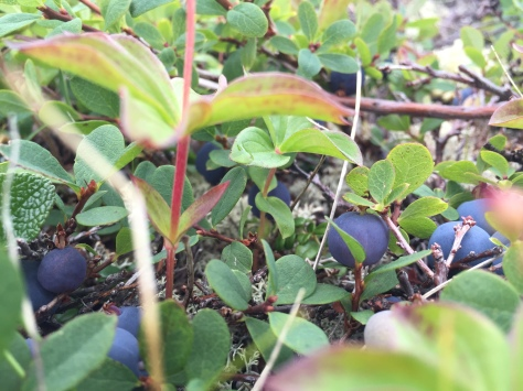 Summer in Alaska: Blueberries, Mushrooms, Peonies & Mimosas