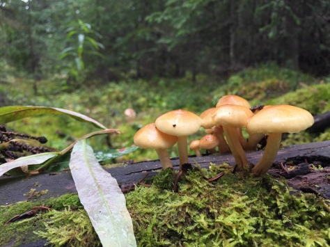 Inedible mushrooms found in Anchorage forest