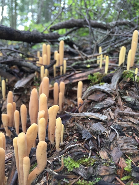 Inedible mushrooms found in Anchorage forests